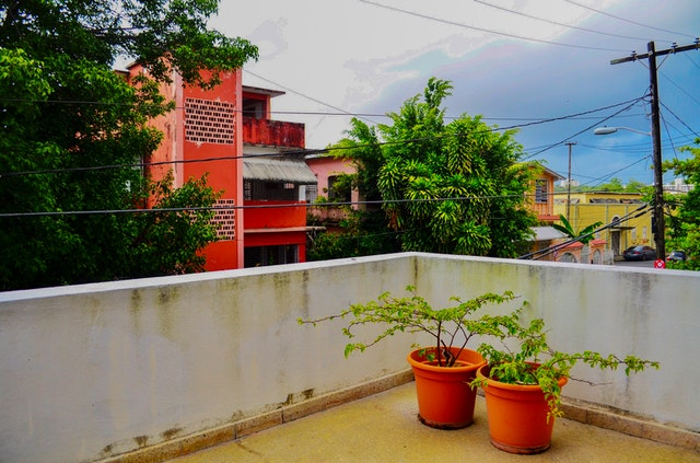 Pflanzen auf Ihrem Balkon: Welche Pflanzen machen puppig?